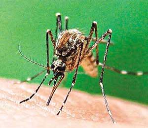 Comment se protéger contre les moustiques pendant le trekking au Vietnam