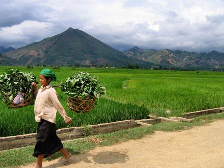 Circuits Voyages au Vietnam privés en minibus
