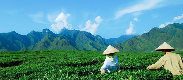 Citcuits Voyage Photo au Vietnam