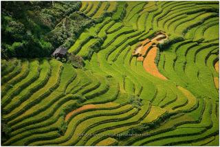 Les meilleures places pour faire du trekking au Nord Vietnam