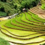 Video Circuit trekking Nord Vietnam Tu Le – Mu Cang Chai