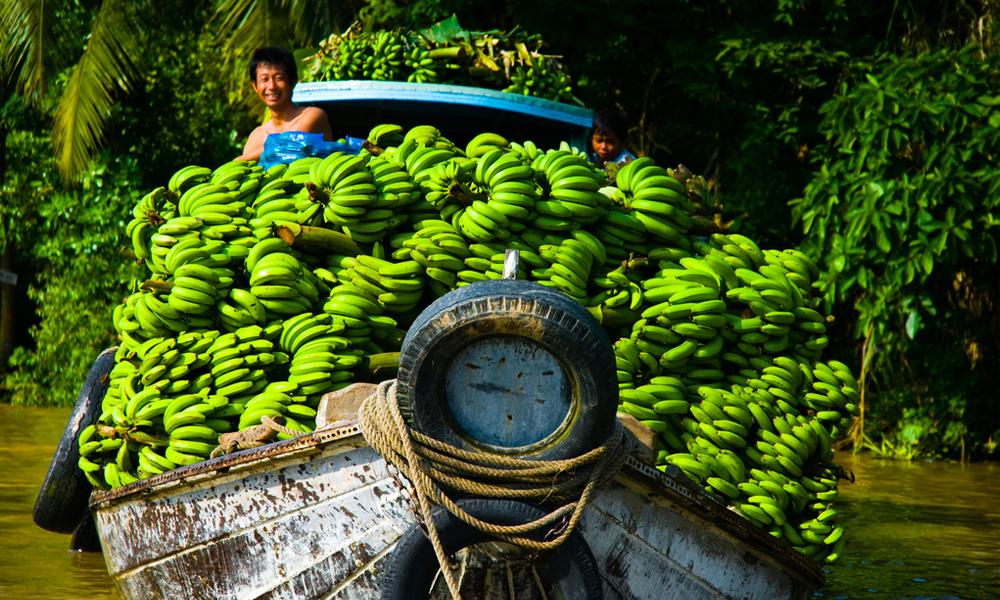 Que Faire pour Rester En Bonne Santé en voyage au Vietnam
