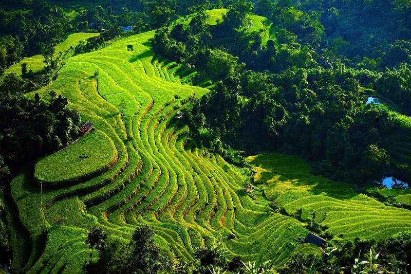 Bons plans Hoang Su Phi, Ha Giang : Que faire, météo, hotels et itinéraires