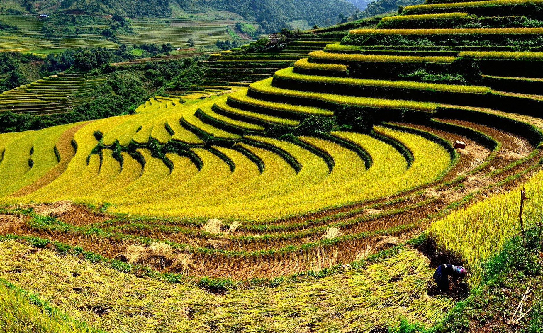 Viet Nâm: les régions
