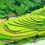 Mu cang Chai. Vietnam