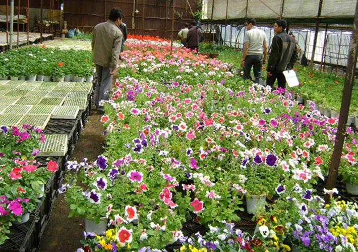 Flower Park Dalat