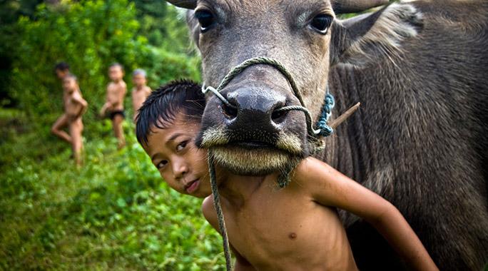 Activités à Luang Prabang: travail en rizières avec buffle d'eau