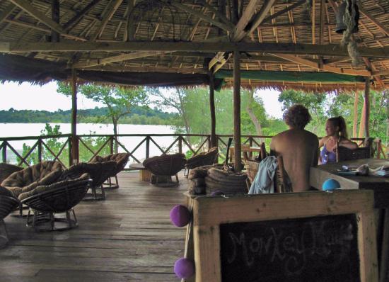 Monkey Maya au Parc national Ream