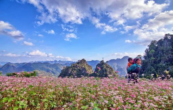 Sarrasins de Ha Giang
