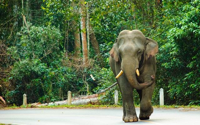 Elephant dans le Parc national de Khao Yai