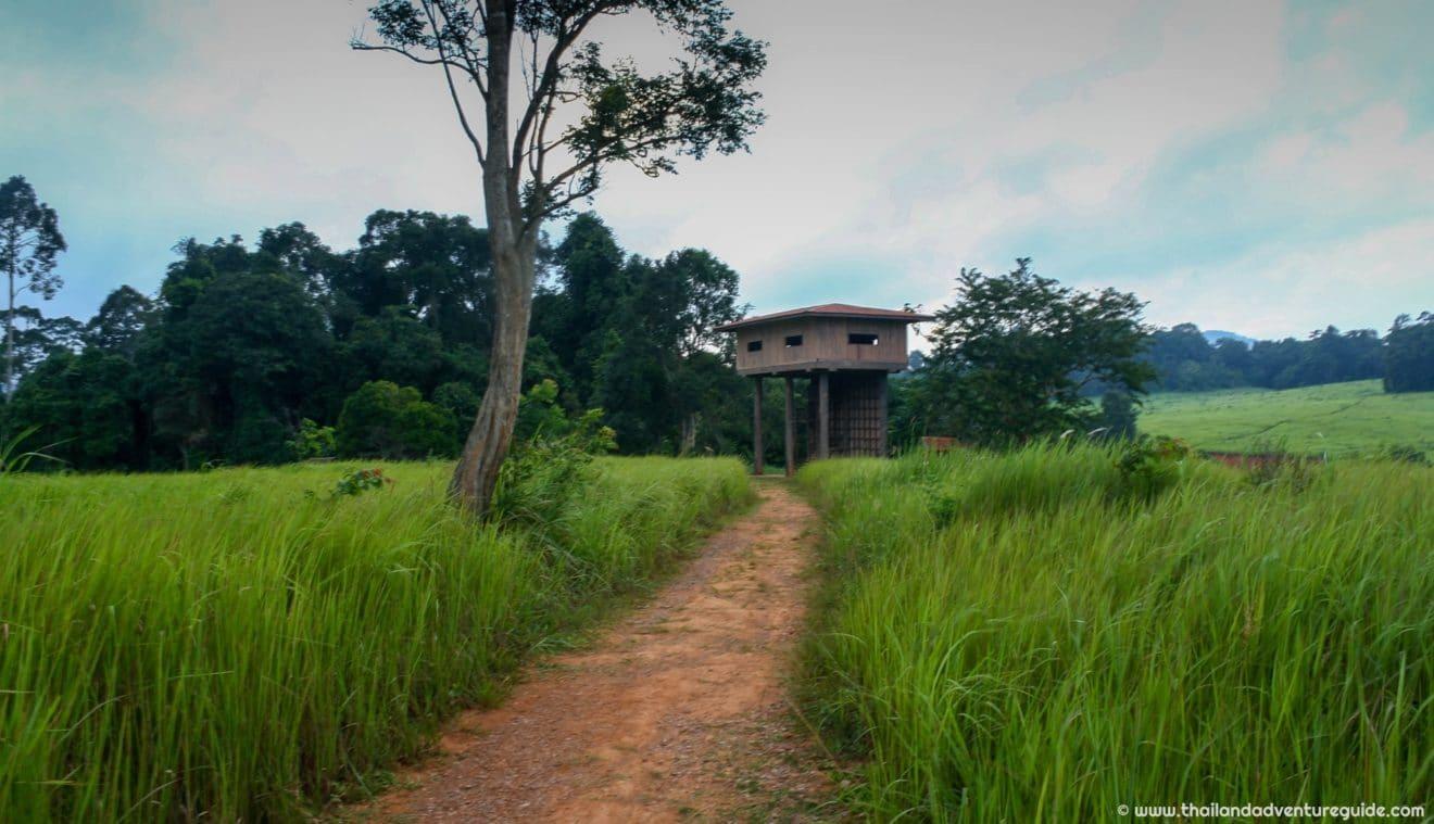 Nong Phak Chi