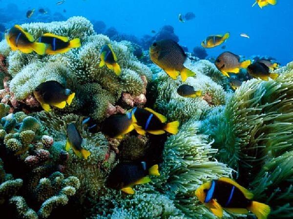 5 Lieux Paradisiaques pour les Amoureux de Plongée Sous-marine en Thaïlande