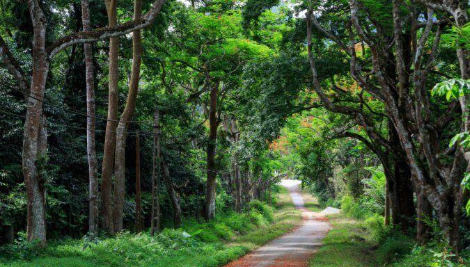 Camping, vélo, randonnée et observation de la nature dans le parc de Cuc Phuong
