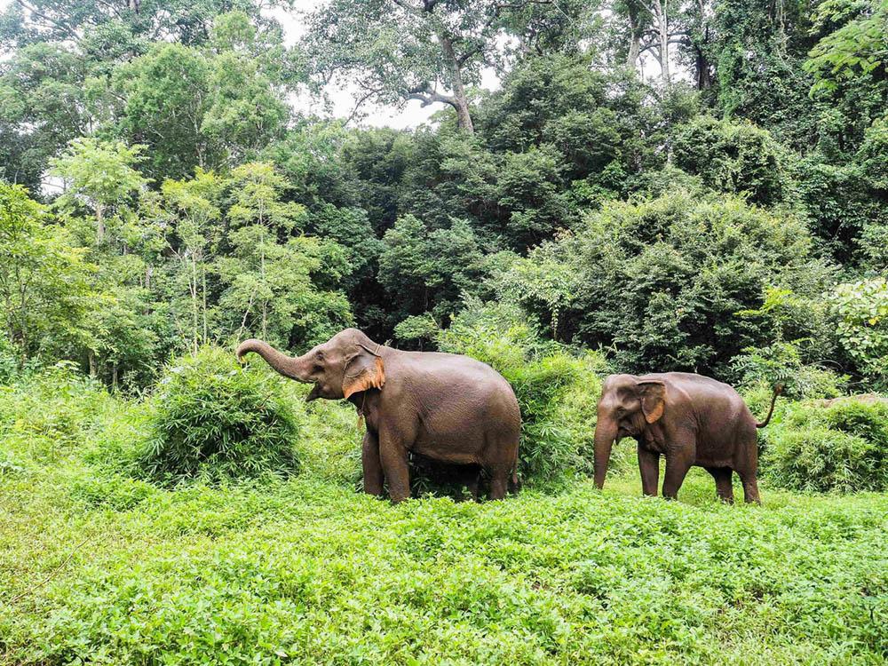 Elephants dans la region Mondulkiri