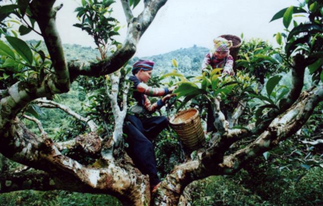 Que faire Yen Bai, Mu Cang Chai, Nghia Lo, belles destinations mais peu visiteés