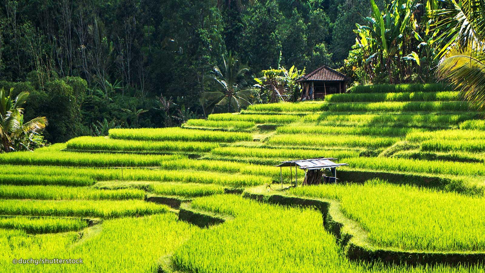 Bali que faire en 10 jours