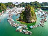 Elevages dans la baie de Lan Ha
