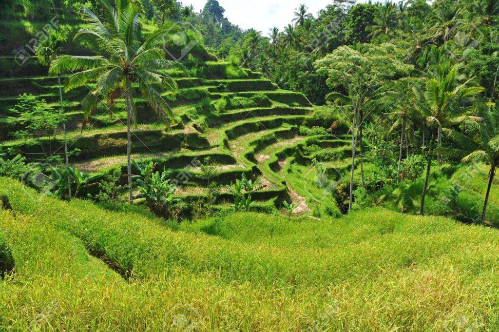 Terrasse de riz de Tegallantang, Bali
