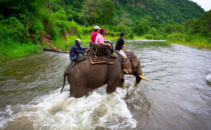 Excursion à dos d'un éléphant