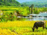 La réserve naturelle de Pu Luong – un site incontournable du Nord