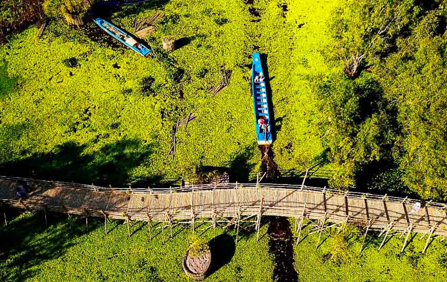 Foret de Tra Su - le pont en bamboo le plus long du Vietnam