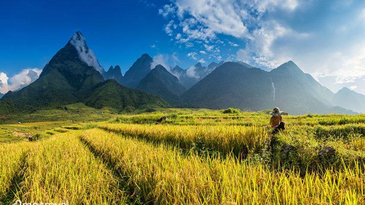 Est ce que le Vietnam est reouvert aux touristes ? Restrictions pour les voyageurs au Vietnam pendant le Covid 19
