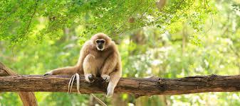 Que faire au parc national de Nam Cat Tien ?