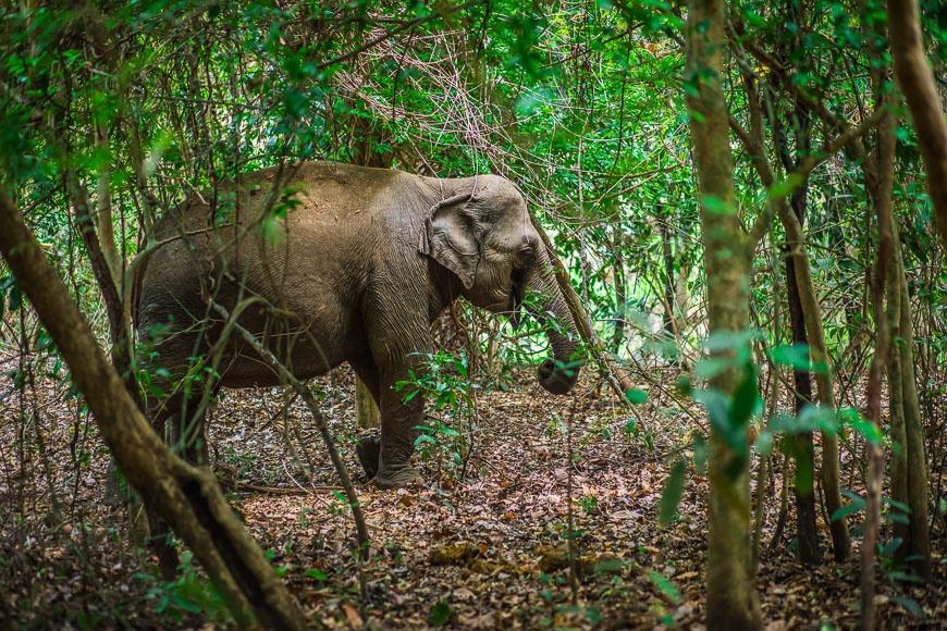 3 endroits où on peut voir les éléphants au Vietnam
