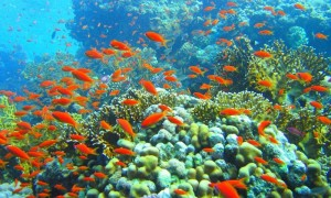 Phu-Quoc-islands-and-snorkeling-Water-puppet-tours